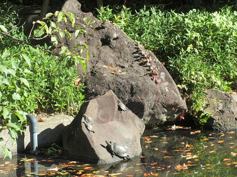 【写真】【サイズ調整】カメの甲羅干し.png