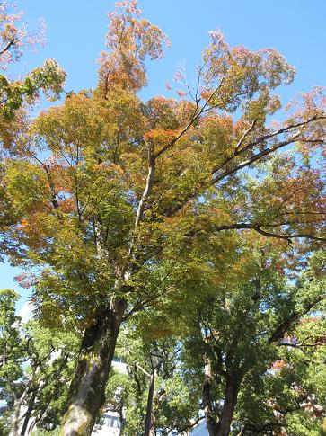 【写真】【サイズ調整】紅葉.png