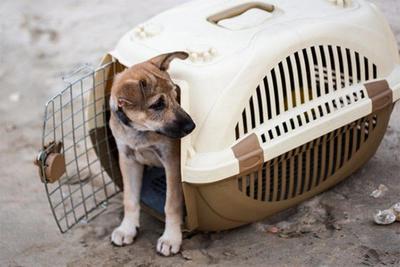 災害時の避難でペットはどうする? 必要な準備や注意点を解説!の画像